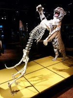 Muzej naravne zgodovine3