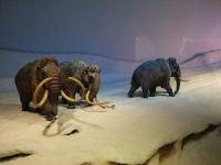 Muzej naravne zgodovine2